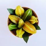 Manzanas de estrella en el artículo de mimbre de bambú Fotos de archivo