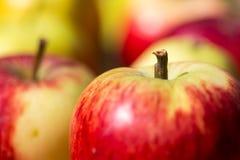 Manzanas de Hadpicked Foto de archivo libre de regalías