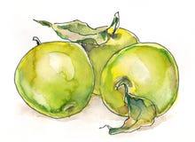 Manzanas de la acuarela ilustración del vector