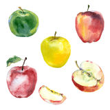 Manzanas de la acuarela fijadas Foto de archivo