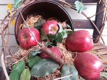 Manzanas de la caída que se derraman fuera de una cesta vieja Foto de archivo
