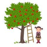 Manzanas de la cosecha de la muchacha stock de ilustración