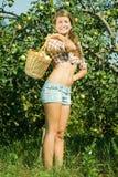 Manzanas de la cosecha de la muchacha en la huerta Imagen de archivo
