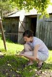 Manzanas de la cosecha de la mujer Fotos de archivo libres de regalías