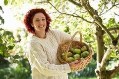 Manzanas de la cosecha de la mujer en jardín imagen de archivo libre de regalías