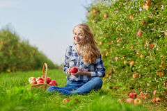 Manzanas de la cosecha de la mujer joven en jardín Foto de archivo