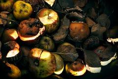 Manzanas de la descomposición en cajón Imagen de archivo