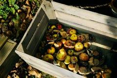 Manzanas de la descomposición en cajón Foto de archivo libre de regalías