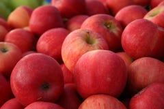 Manzanas de la gala Foto de archivo