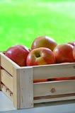 Manzanas de la gala Imágenes de archivo libres de regalías