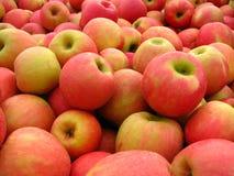 Manzanas de la gala imagen de archivo libre de regalías