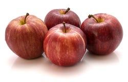 Manzanas de la gala aisladas en el fondo blanco Foto de archivo