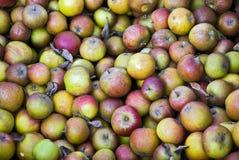 Manzanas de la ganancia inesperada Fotografía de archivo libre de regalías
