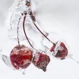 Manzanas de la mierda en rama helada Foto de archivo libre de regalías