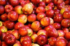Manzanas de Macintosh Foto de archivo libre de regalías
