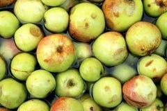 Manzanas de sidra Imagenes de archivo