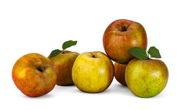 Manzanas del cuajo Fotografía de archivo