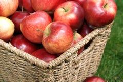 Manzanas del descubrimiento Foto de archivo libre de regalías