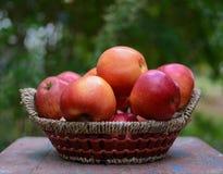 Manzanas del jardín Fotografía de archivo libre de regalías