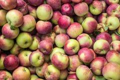 Manzanas del lobo Fotografía de archivo libre de regalías