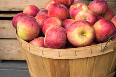 Manzanas del lobo en una cesta Fotos de archivo libres de regalías