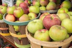 Manzanas del lobo en una cesta Imagen de archivo