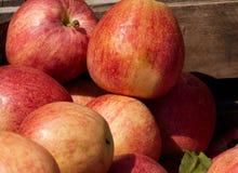 Manzanas del mercado fresco Fotografía de archivo libre de regalías