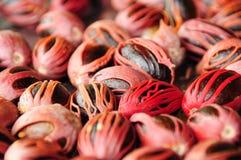 Manzanas del nuez moscada molida moscada Fotografía de archivo