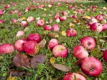 Manzanas del otoño fotografía de archivo