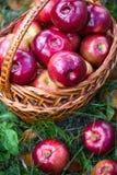 Manzanas del otoño Fotos de archivo