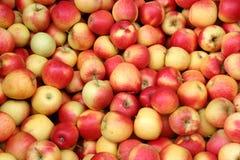 Manzanas dulces de Elstar Imágenes de archivo libres de regalías