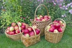 Manzanas dulces rojas en cestas Imagen de archivo