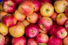 Manzanas ecológicas en cajones de madera Foto de archivo libre de regalías