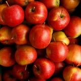 Manzanas Eliza Imágenes de archivo libres de regalías