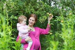 Manzanas embarazadas de la cosecha de la madre con su hija del bebé Foto de archivo
