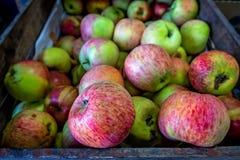 Manzanas en cesta Fotografía de archivo libre de regalías