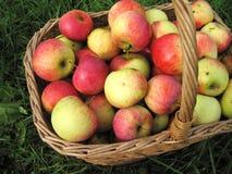 Manzanas en cesta foto de archivo libre de regalías