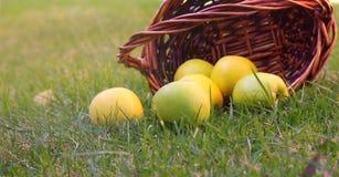 Manzanas en cesta Fotografía de archivo