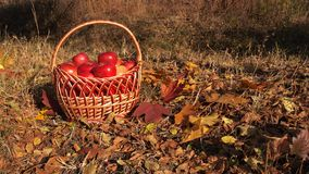 Manzanas en cesta Fotos de archivo
