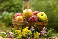Manzanas en cesta foto de archivo
