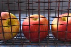 Manzanas en cesta del metal Imágenes de archivo libres de regalías