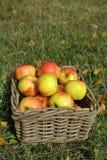 Manzanas en cesta en hierba fotografía de archivo