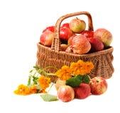 Manzanas en cesta tejida Fotos de archivo