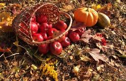 Manzanas en cesta y calabaza Imagenes de archivo