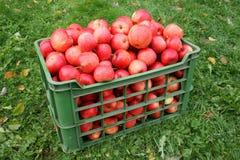 Manzanas en el rectángulo Imagen de archivo libre de regalías