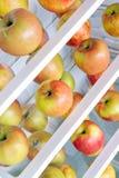 Manzanas en el refrigerador Fotos de archivo libres de regalías