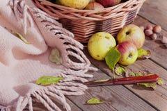 Manzanas en el vector de madera Fotos de archivo libres de regalías