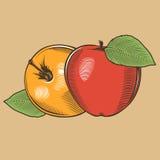 Manzanas en estilo del vintage Ilustración coloreada del vector Fotos de archivo libres de regalías