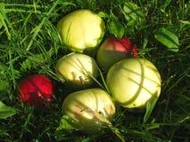 Manzanas en hierba Foto de archivo