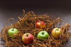 Manzanas en hierba marrón artificial Imagenes de archivo